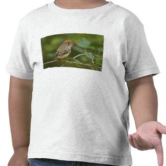 Male Ruby-crowned Kinglet Regulus calendula T-shirts