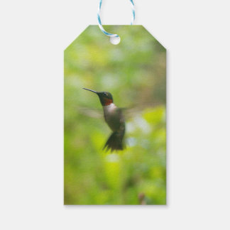 Male Ruby Throat Hummingbird gift tag