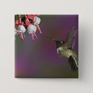 Male Ruby throated Hummingbird, Archilochus 2 15 Cm Square Badge