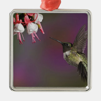 Male Ruby throated Hummingbird, Archilochus 2 Christmas Ornament