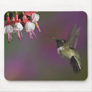 Male Ruby throated Hummingbird, Archilochus 2 Mouse Mat