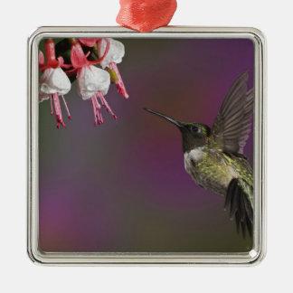 Male Ruby throated Hummingbird, Archilochus 2 Silver-Colored Square Decoration
