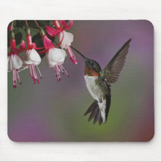 Male Ruby throated Hummingbird, Archilochus Mouse Mat