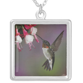 Male Ruby throated Hummingbird, Archilochus Silver Plated Necklace