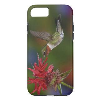 Male Ruby-throated Hummingbird feeding on iPhone 8/7 Case