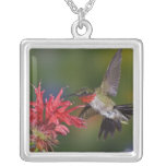 Male Ruby-throated Hummingbird feeding on Personalized Necklace