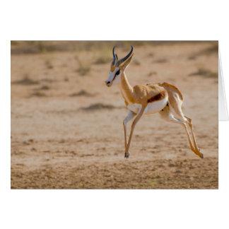 Male Springbok (Antidorcas Marsupialis) Jumping Card