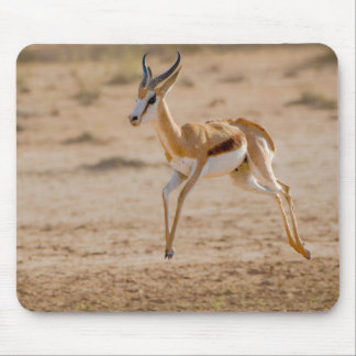 Male Springbok (Antidorcas Marsupialis) Jumping Mouse Mat