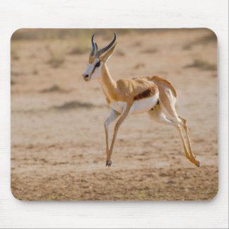 Male Springbok (Antidorcas Marsupialis) Jumping Mouse Pad