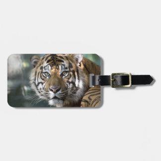 Male Sumatran Tiger (Panthera tigris sumatrae) Luggage Tag