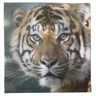 Male Sumatran Tiger (Panthera tigris sumatrae) Napkin