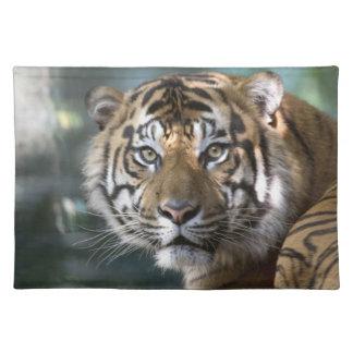 Male Sumatran Tiger (Panthera tigris sumatrae) Placemat