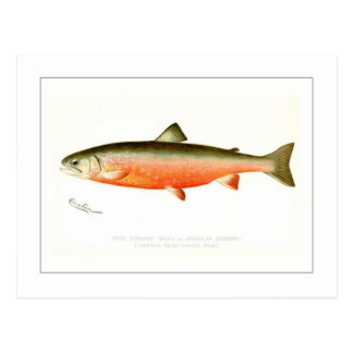 Male Sunapee Trout Postcard