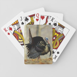 Male turkey strutting, Illinois Playing Cards