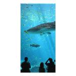Male Whale Shark Customized Photo Card