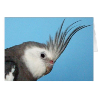 Male Whiteface Cockatiel Card