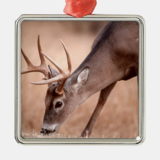 Male whitetail deer grazing Silver-Colored square decoration
