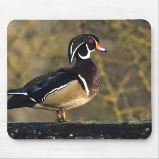 Male wood duck, Canada Mouse Mat