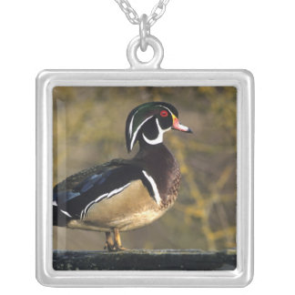 Male wood duck, Canada Silver Plated Necklace