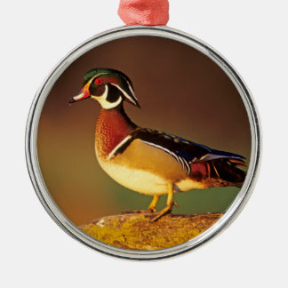 Male wood duck, Illinois Silver-Colored Round Decoration