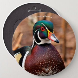 Male Wood Duck in the Woods 6 Cm Round Badge