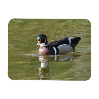 Male Wood Duck Magnet
