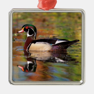 Male wood duck swims, California Silver-Colored Square Decoration
