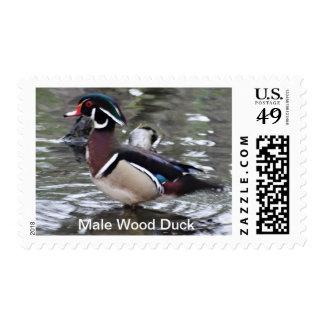 Male wood duck US nature postage stamp