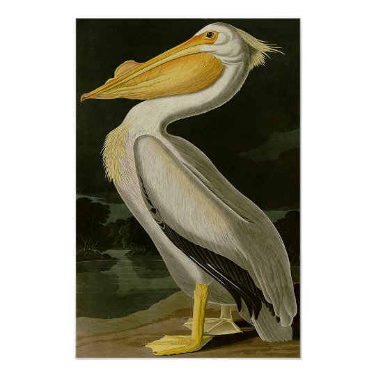 Malibu Life Design Series Pelican Poster