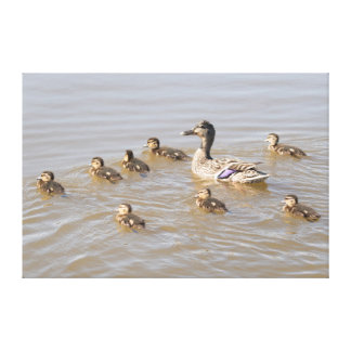 Mallard and Ducklings Canvas Print