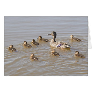 Mallard and Ducklings Card