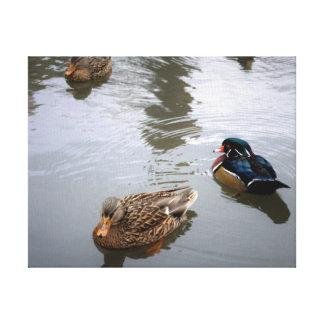 Mallard and Wood Ducks in a Pond - Canvas Print