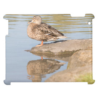 Mallard Cover For The iPad