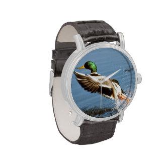 Mallard Drake Duck Wrist Watches