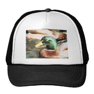 Mallard Drake Trucker Hats