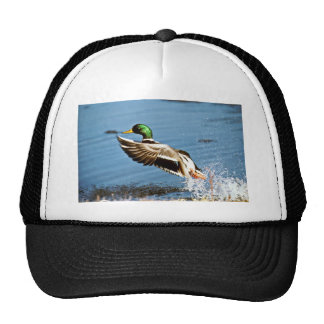 Mallard drake hat