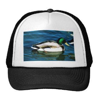 Mallard -drake hats