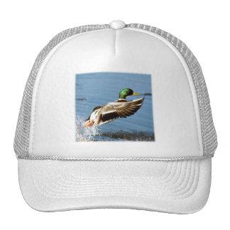 Mallard Drake Takes Flight Trucker Hats