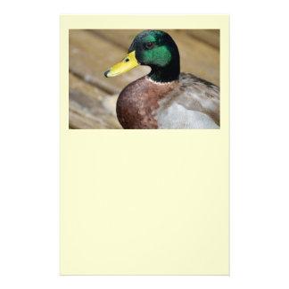Mallard Duck 14 Cm X 21.5 Cm Flyer
