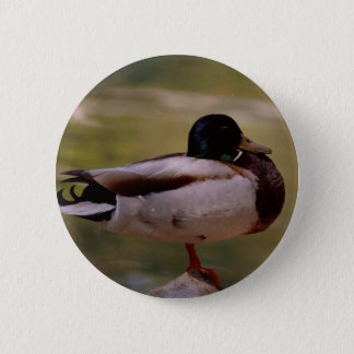 Mallard Duck 6 Cm Round Badge