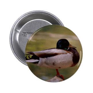 Mallard Duck 6 Cm Round Badge