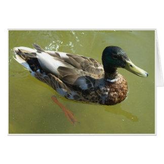 Mallard Duck Card