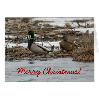 Mallard Duck Christmas Card