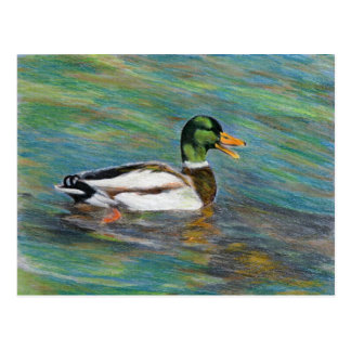 Mallard Duck Coloured Pencil Drawing Postcard