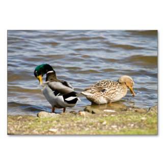 Mallard Duck couple Card