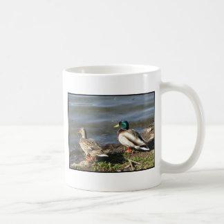 Mallard duck couple mug