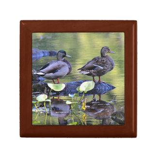 Mallard duck couple small square gift box