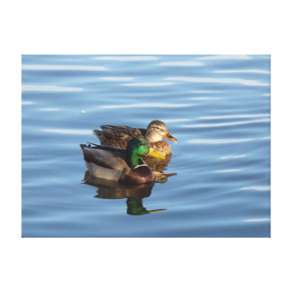 Mallard Duck Couple Wrapped Canvas Stretched Canvas Prints