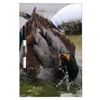 Mallard duck Dry-Erase boards