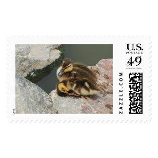 Mallard Duck Duckling Large First Class Postage